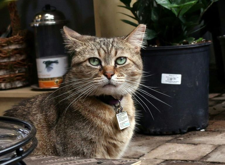Photo of a cat in a garden