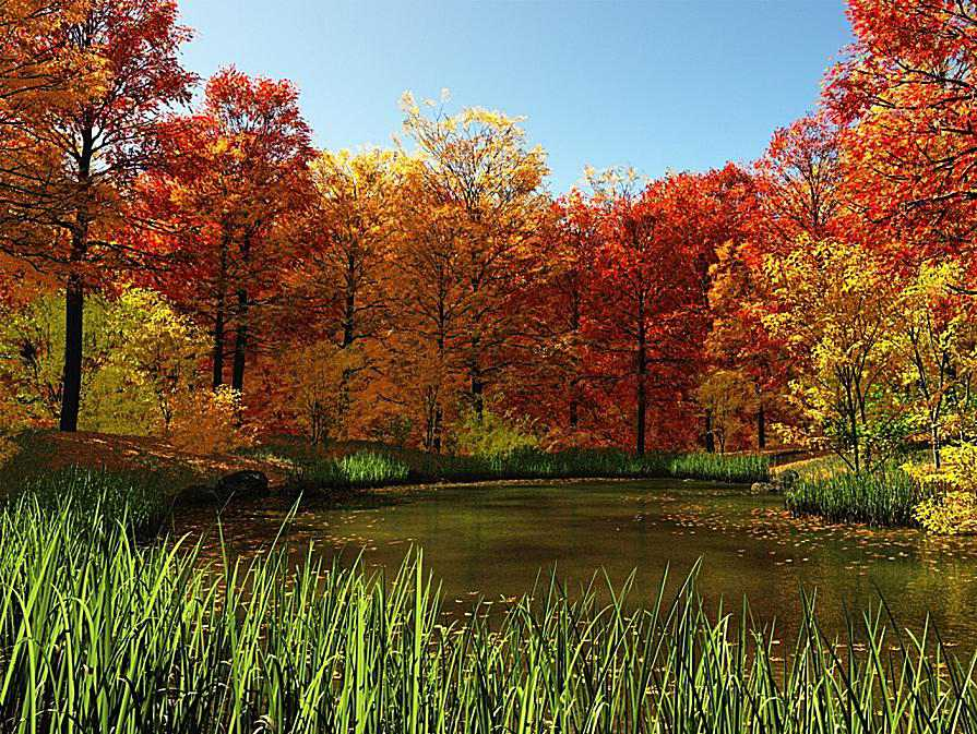 Fall Country Pond By Wallpaper Stock