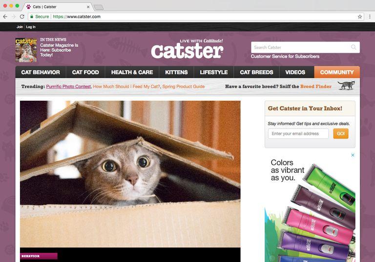 Pet Social Networks - Catster