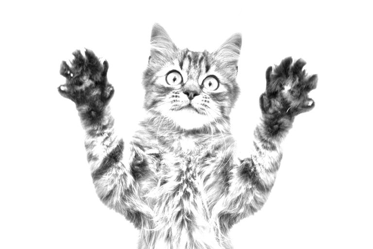Turn a Photo into a Photoshop Pencil Sketch