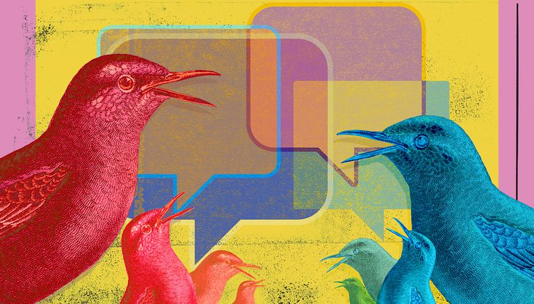 Birds communicating with online messaging