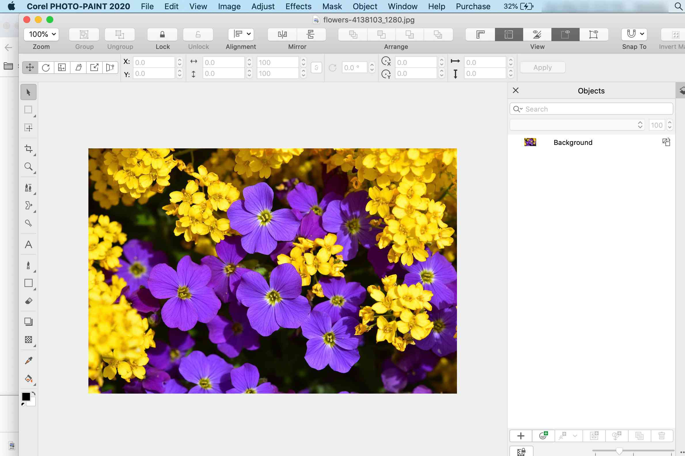 Photo of flowers opened in Corel Photo-Paint