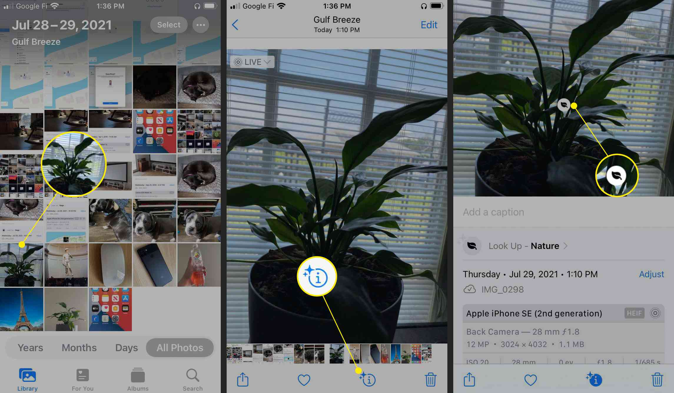 iOS 15 Photos app with plant photo, information icon, and Visual Lookup icon highlighted