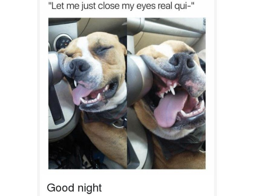 Good Night Meme Good Night Meme For Girl 111ideas 20 Best Good