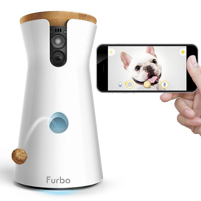 Furbo pet camera showing white dog on iPhone