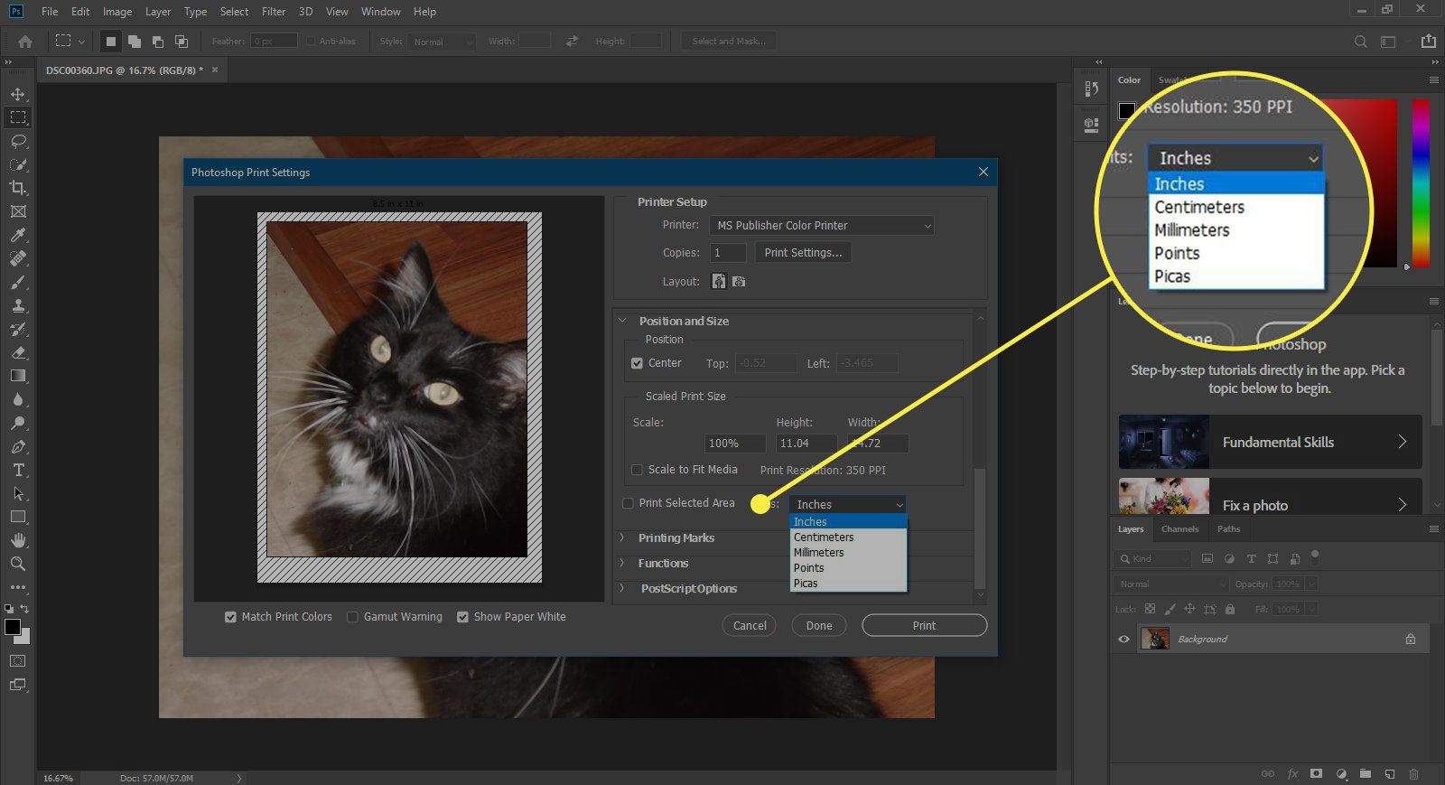 A screenshot of Photoshop's Print window with the Print Selected Area options highlighted