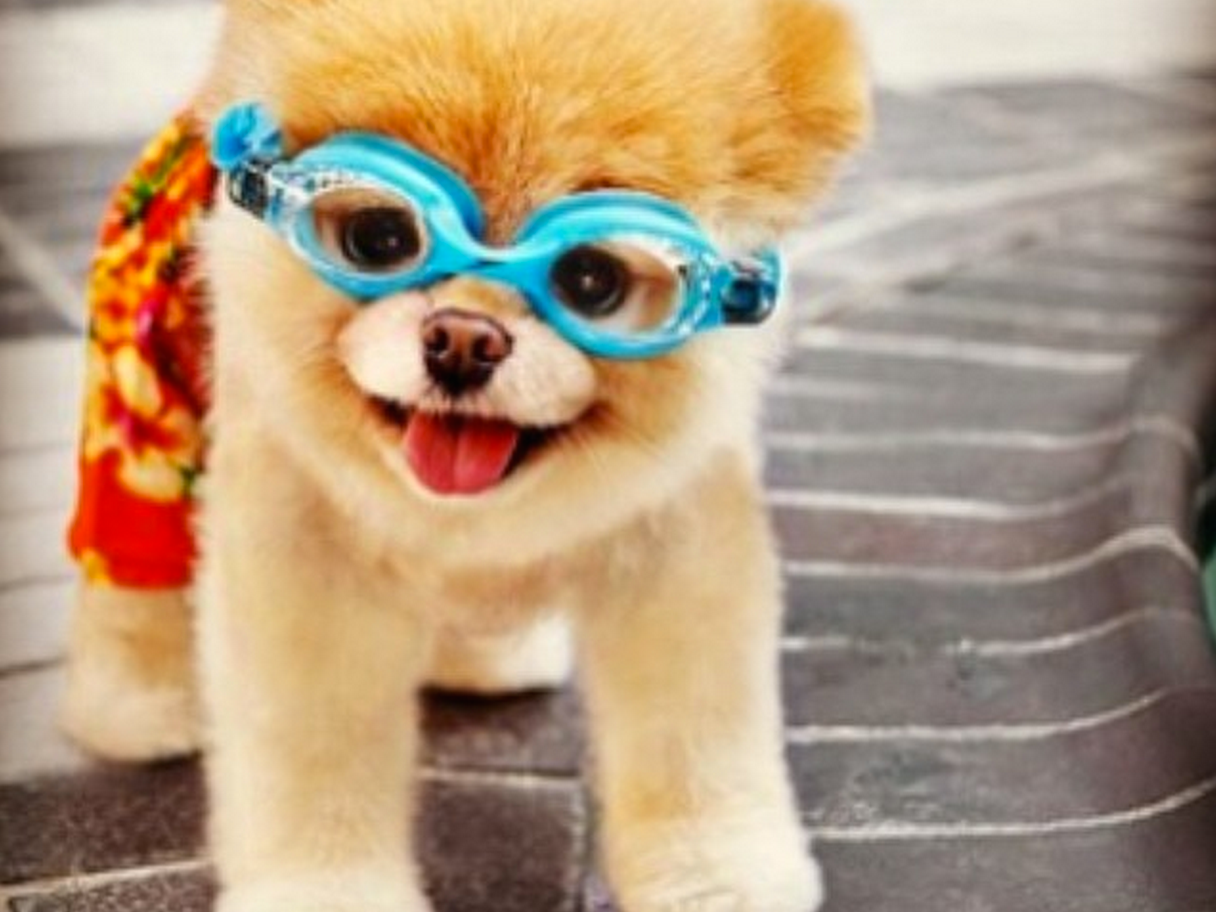 10 Of The Most Famous Dogs On The Internet