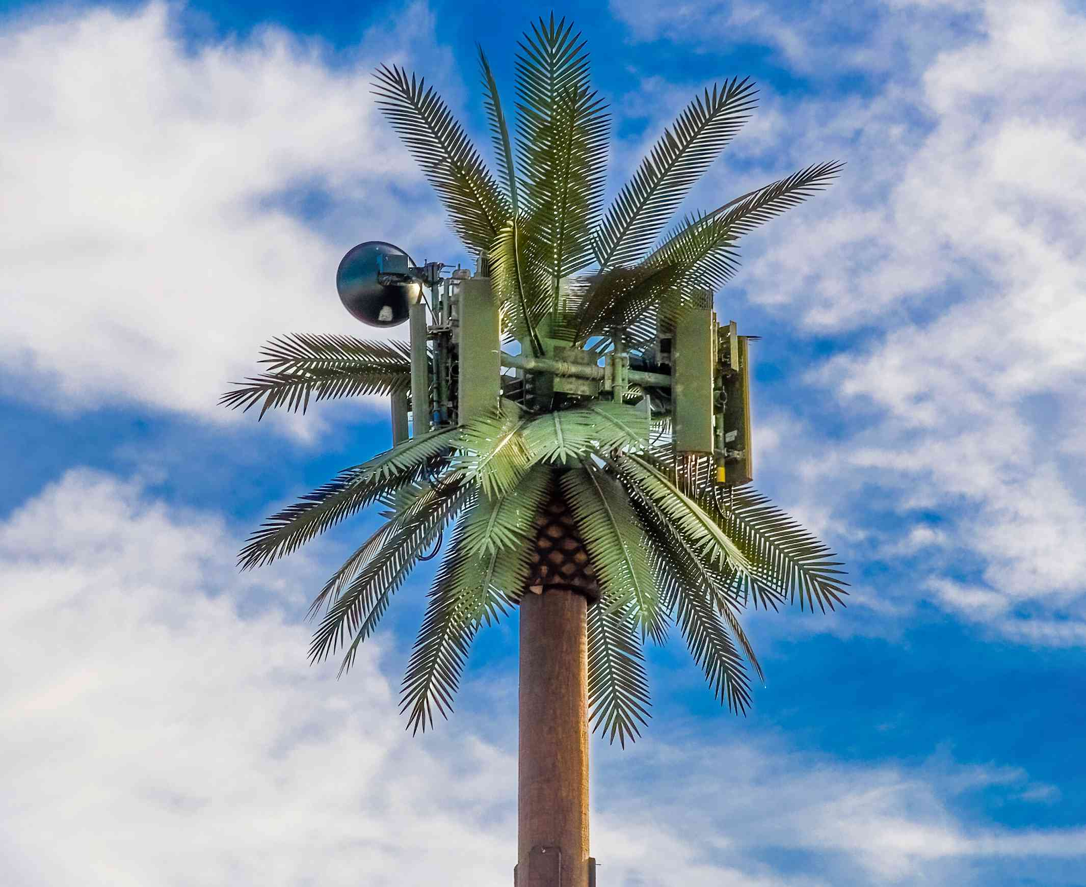A camouflaged telecommunications tower that looks like a palm tree.