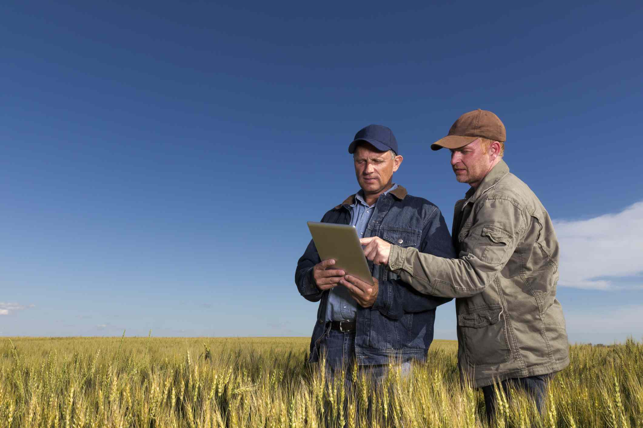 two farmers using a tablet while standing in a field