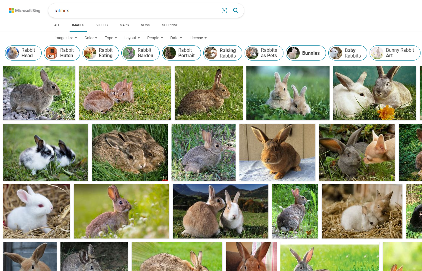 Bing image search for rabbits