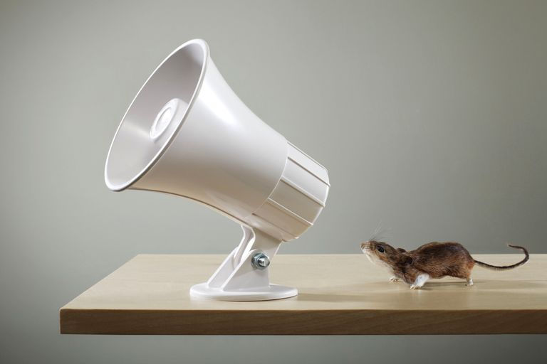 Photo of a small mouse at a megaphone speaker
