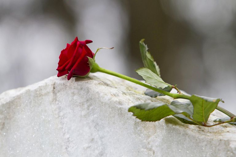 Red rose on gravestone in cemetery