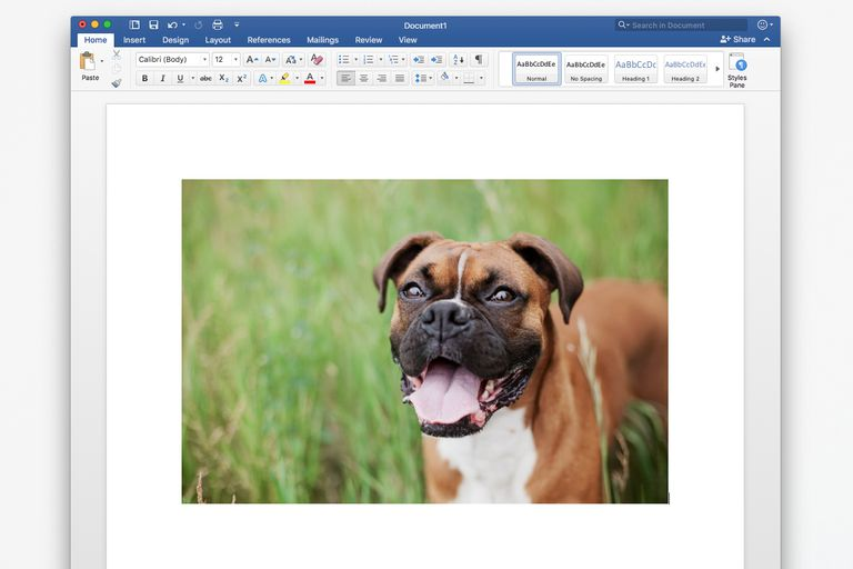 Photo in Microsoft Word