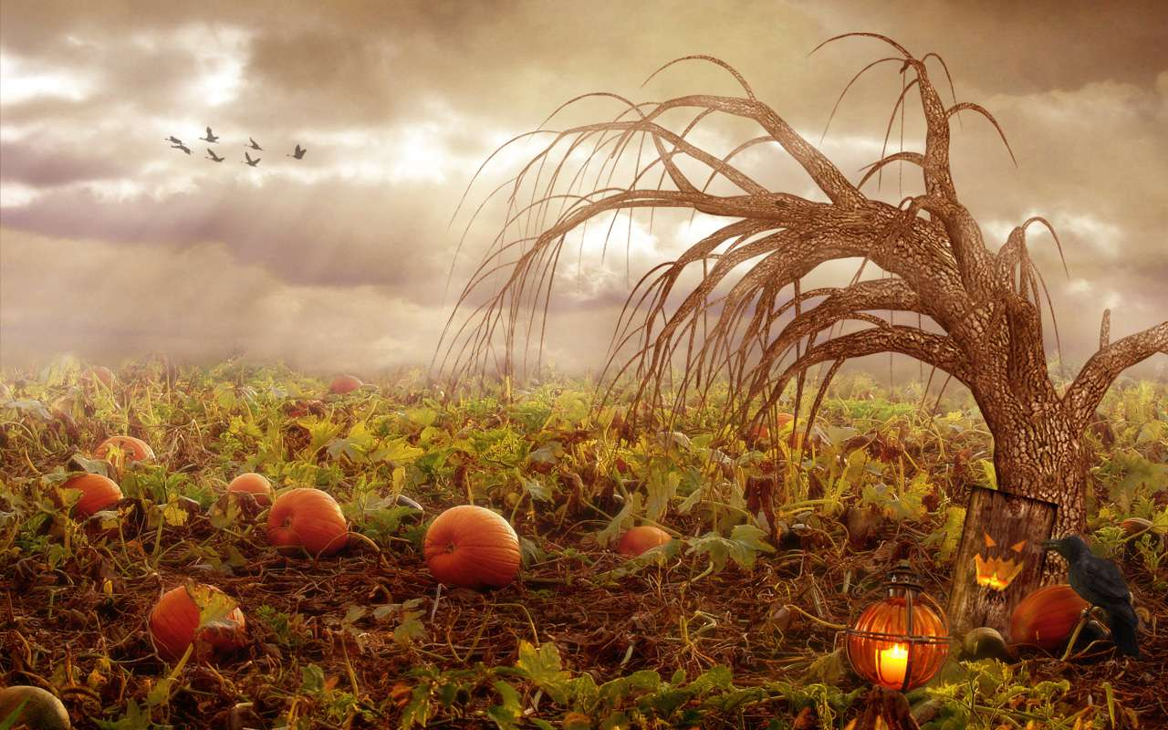 A tree in a pumpkin field with a stormy sky