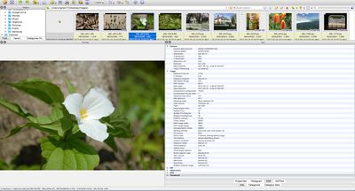 How to Correct a Digital Photo Turned Sideways