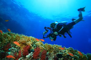 An Underwater Photographer with an SLR camera approaches a coral reef with tropical fish.
