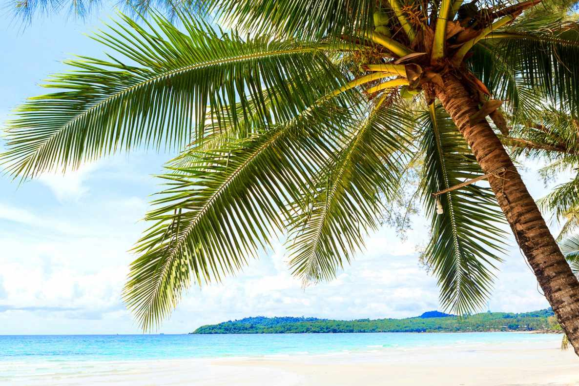 Free beach wallpaper featuring a lone palm tree leaning over a beach