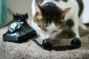 Photo of Cat Talking in Old toy Telephone