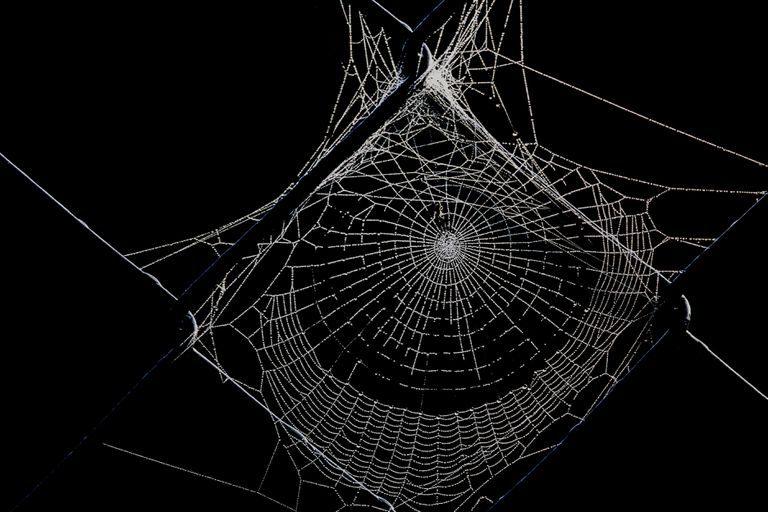 Spiderweb photo created on digital drawing software
