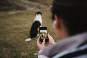 Someone taking photographs of their dog using a smart phone.