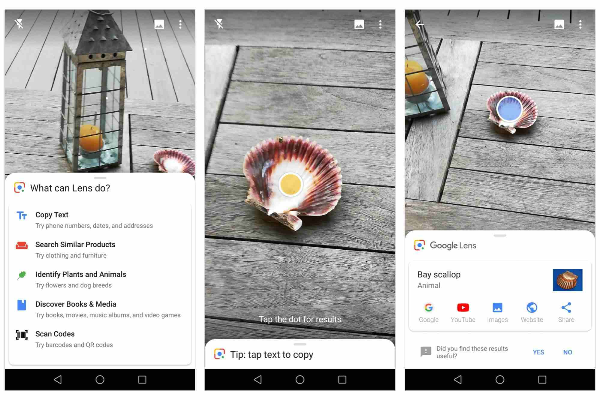 Google Lens, showing identification of a Bay scallop with the camera