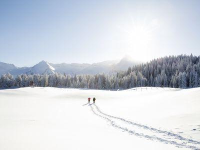 Snow tracks of couple walking toward trees and mountain range, Sattelbergalm, Tyrol, Austria