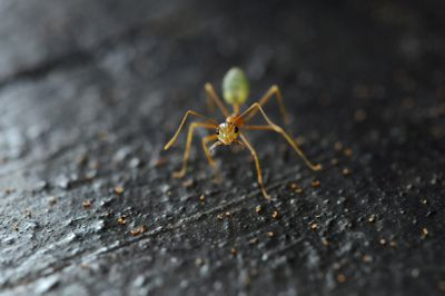 Close up of green ant