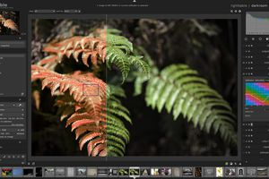darktable's darkroom mode with an image opened