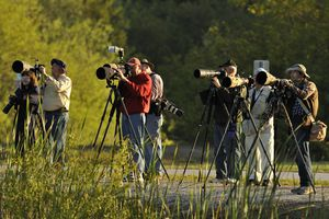 A group of photographers using telephoto lenses.