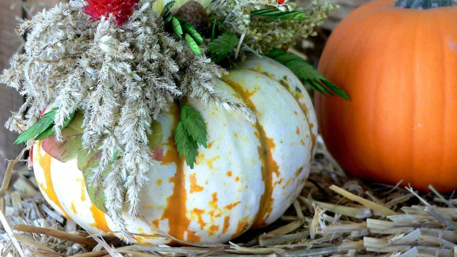 Free autumn wallpaper featuring decorated pumpkins.