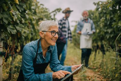 Someone using a tablet computer in a vineyard.
