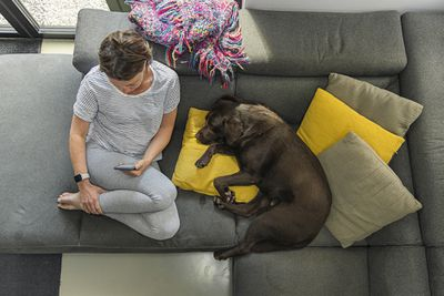 A bird's eye view of a person sitting on a sofa looking at their smartphone while their dog lies next to them