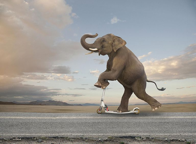 An image of an elephant riding a scooter because these sites are that useless.