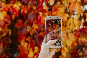 An image of a woman taking an Instagram story of some colorful leaves.
