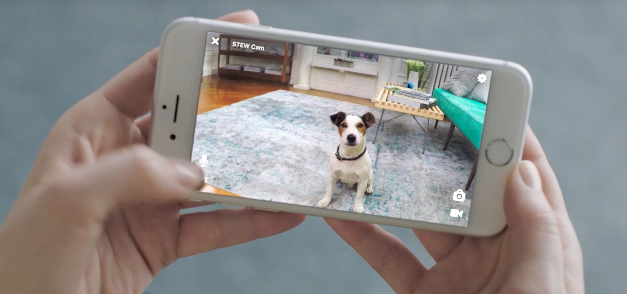 eacee5a7c46 The 8 Best Pet Cameras of 2019