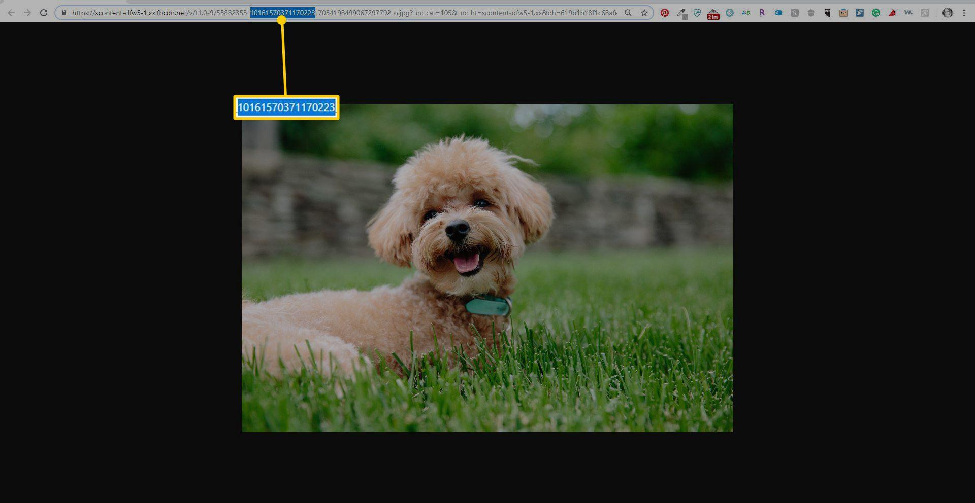 Screenshot showing image ID number