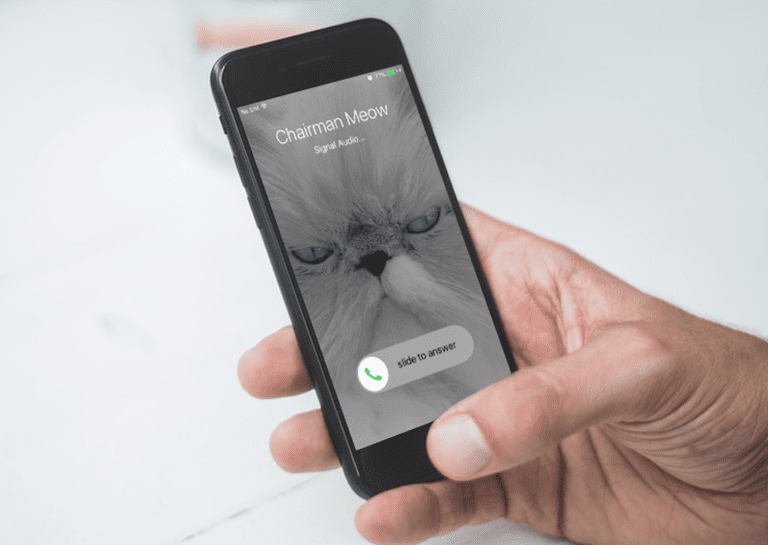 Photo of a hand holding an iPhone that shows a cat on it, calling Chairman Meow with Signal app.
