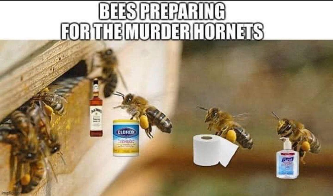Murder hornets meme