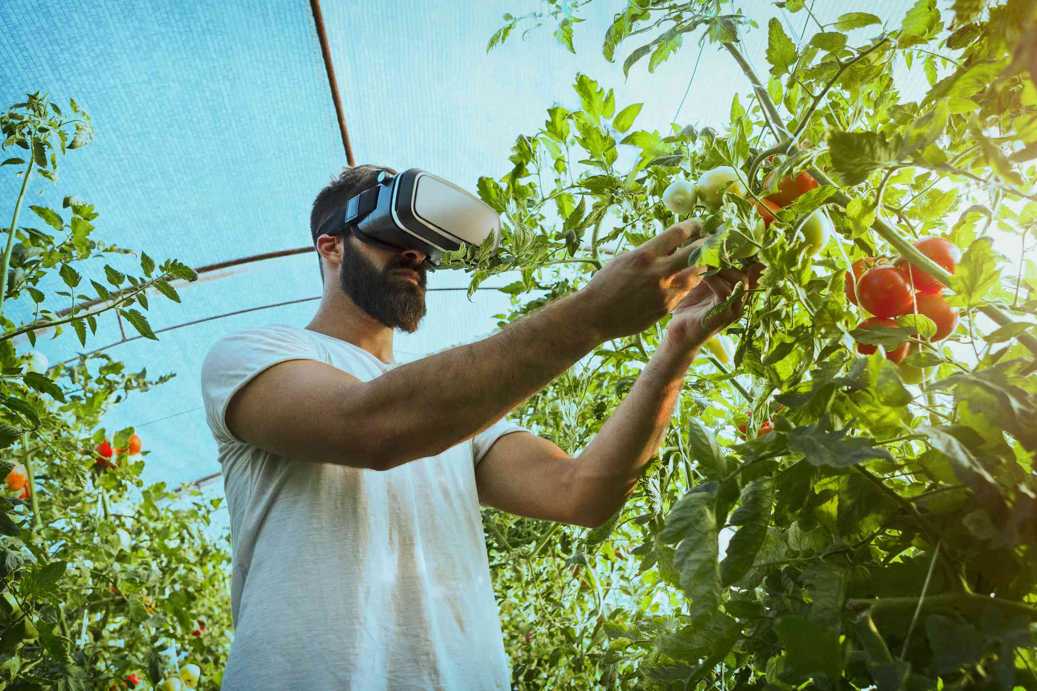 person wearing a VR headset while in a greenhouse