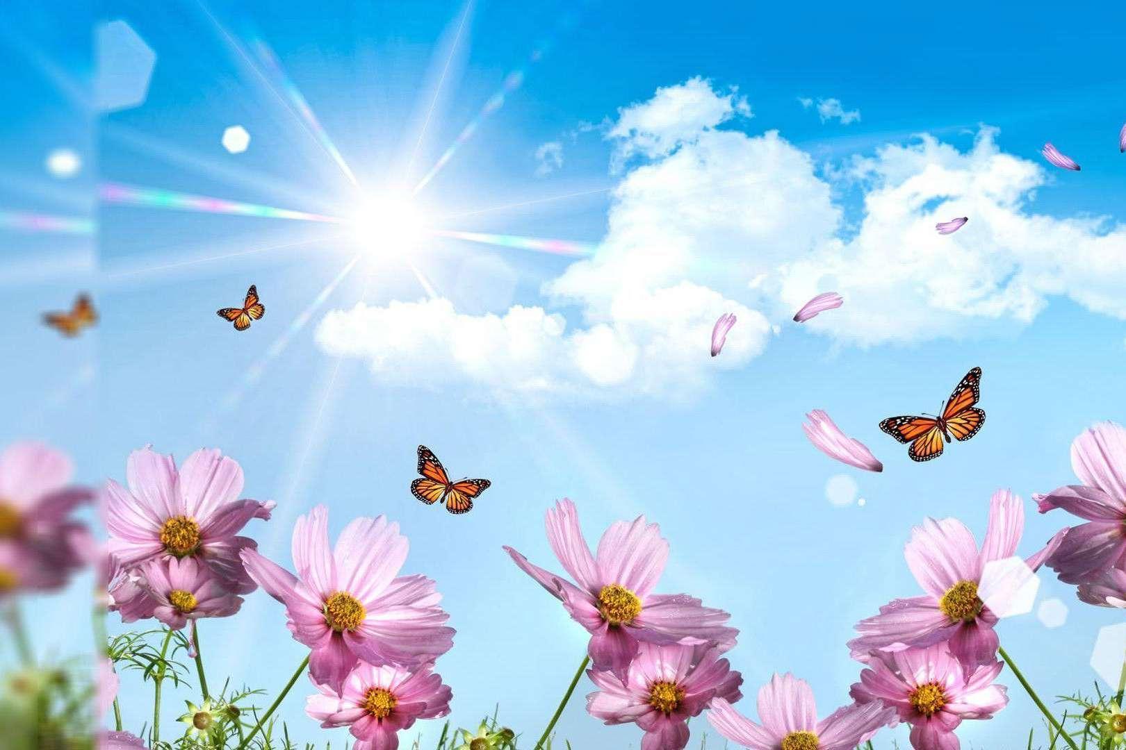 Butterfly fantasy wallpaper