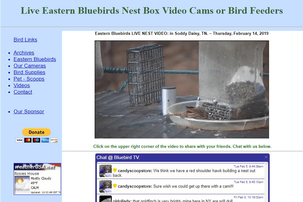 Scoops-scoops.net live Eastern bluebirds nest box camera feed
