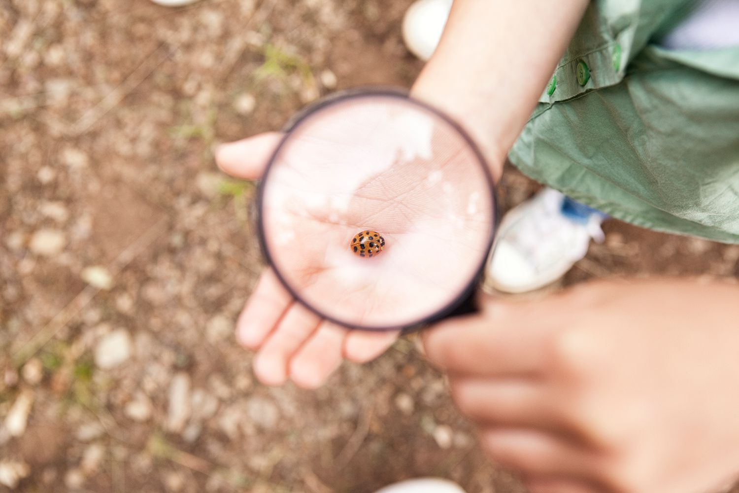 Ladybird on girl's hand under magnifying glass