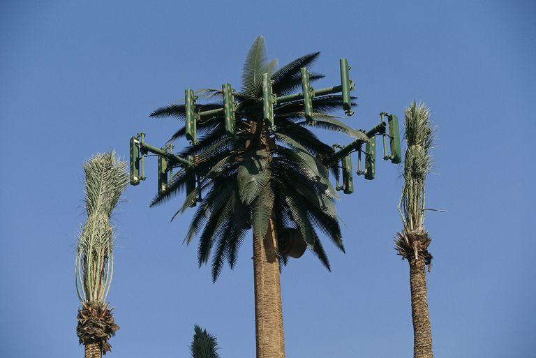 A cellular antenna disguised as a palm tree.