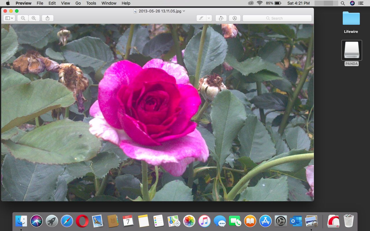 A photo opened in Preview in macOS