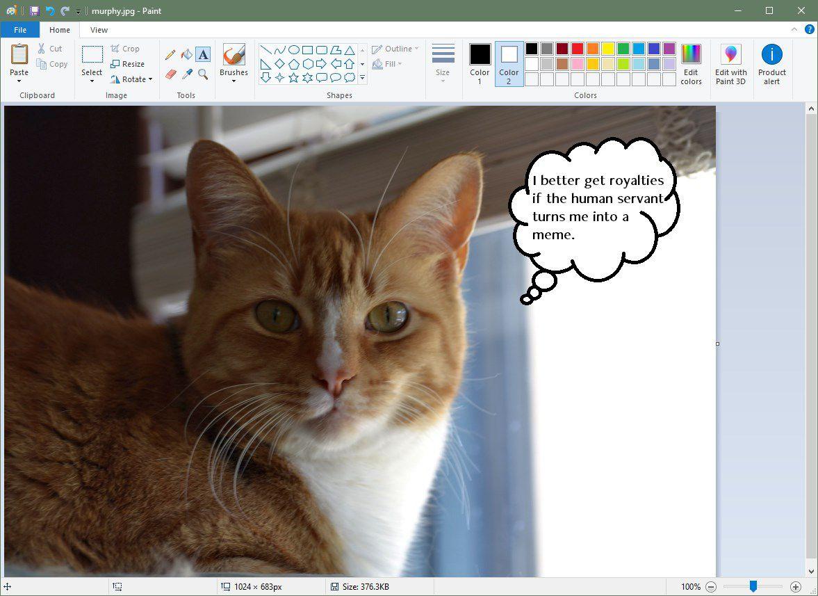 screenshot of microsoft paint speech bubble
