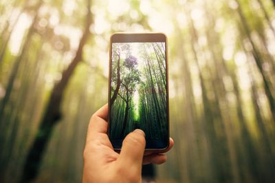 An iPhone with a photo of a forest on its screen