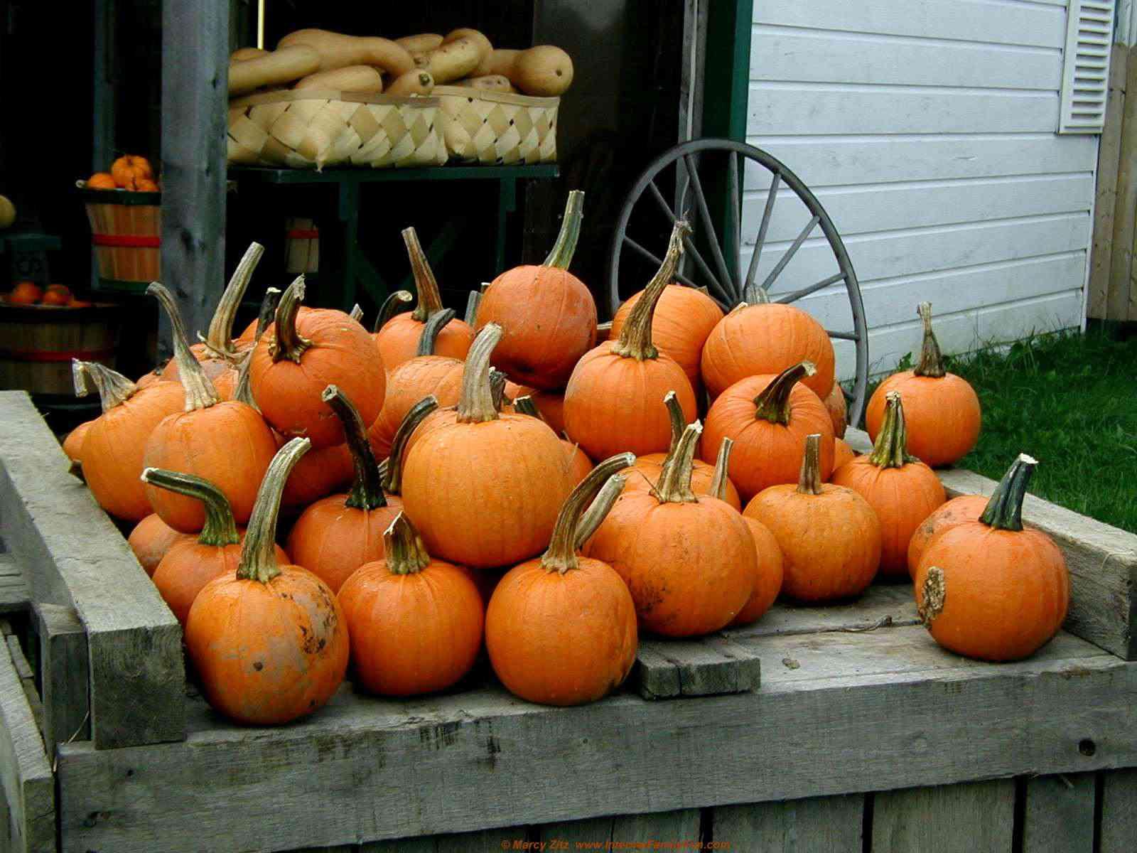 Free autumn wallpaper featuring pumpkins on a wooden cart.