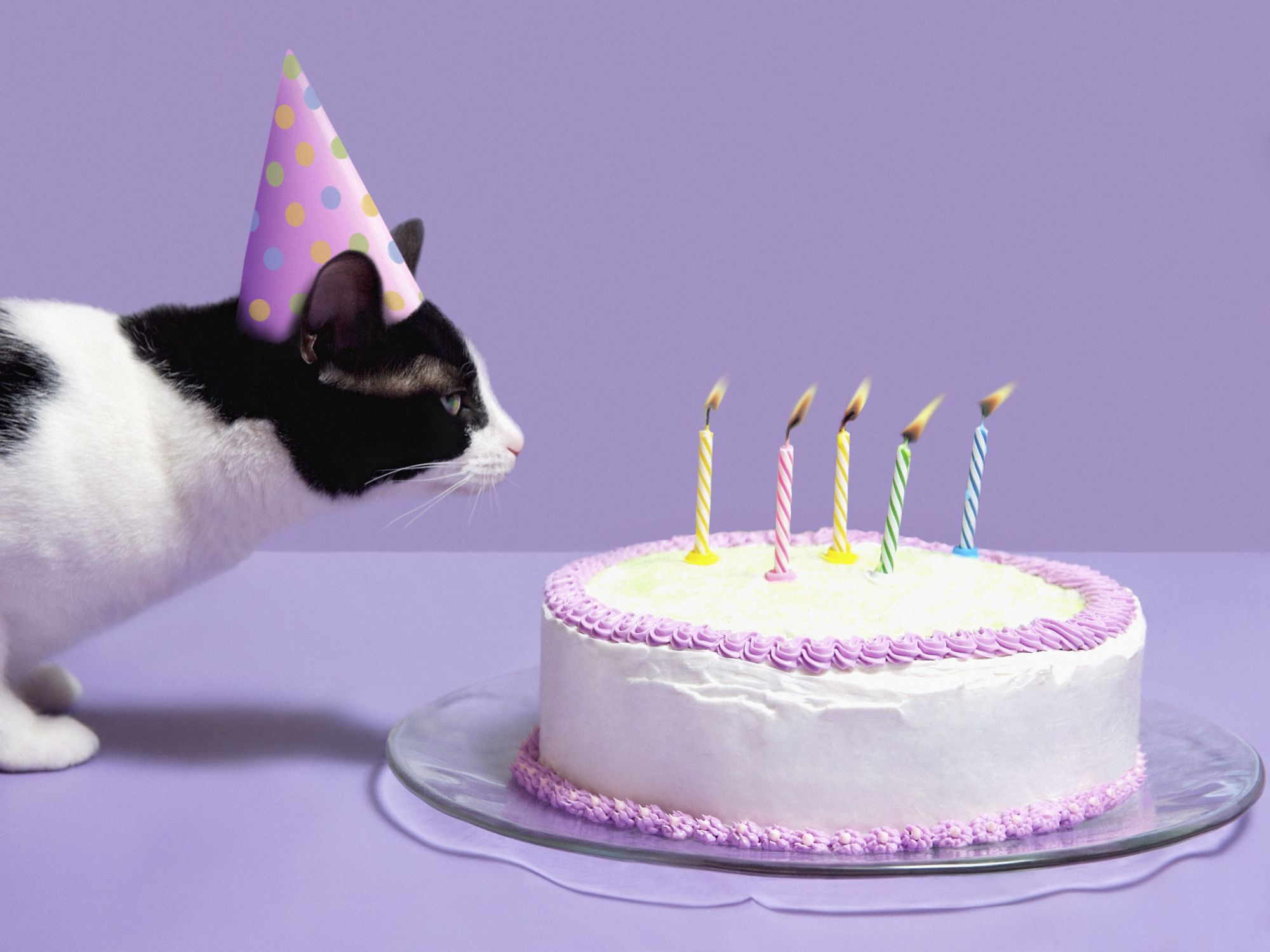 The 15 Best Happy Birthday Memes Of 2019