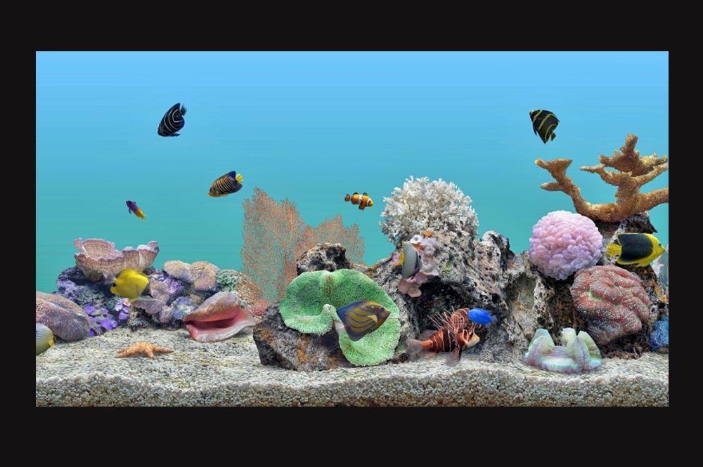 Roku Aquatic Life 4K Screensver