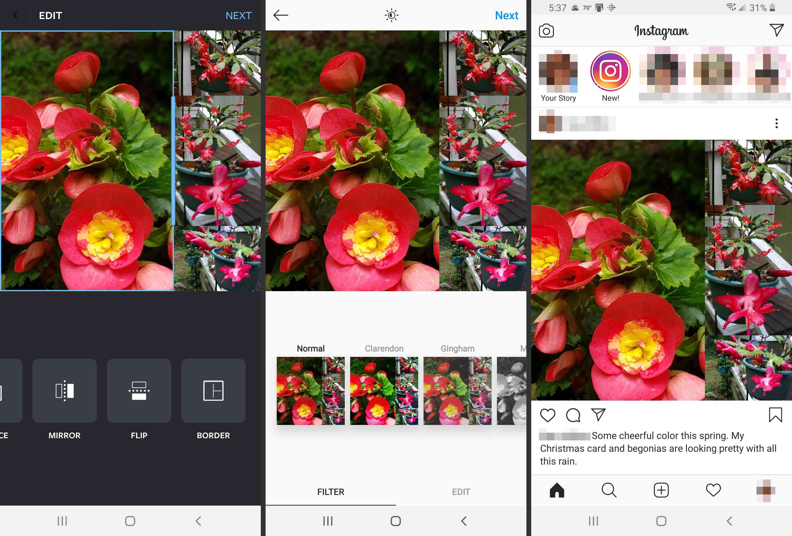 A photo collage in Instagram.